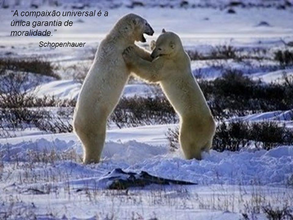 A compaixão universal é a única garantia de moralidade.
