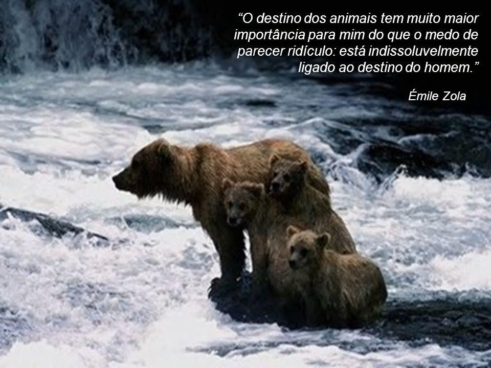 O destino dos animais tem muito maior importância para mim do que o medo de parecer ridículo: está indissoluvelmente ligado ao destino do homem.