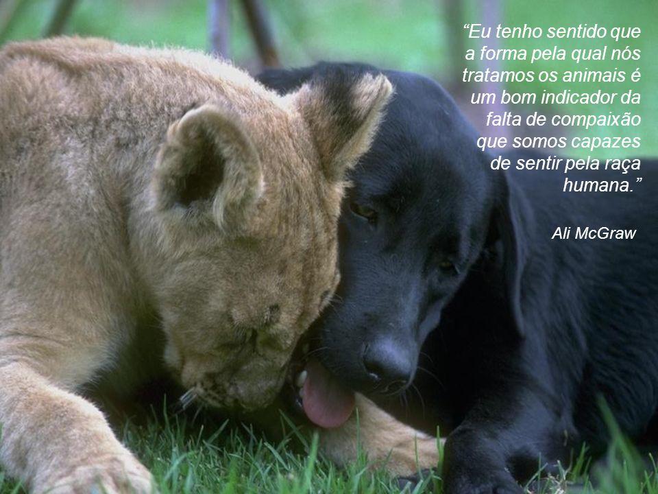Eu tenho sentido que a forma pela qual nós tratamos os animais é um bom indicador da falta de compaixão que somos capazes de sentir pela raça humana.