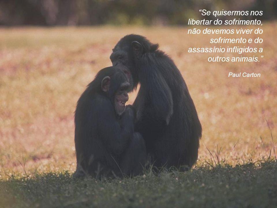 Se quisermos nos libertar do sofrimento, não devemos viver do sofrimento e do assassínio infligidos a outros animais.