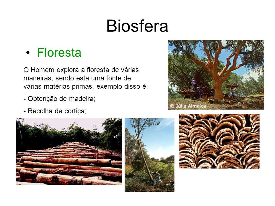 Biosfera • Floresta. O Homem explora a floresta de várias maneiras, sendo esta uma fonte de várias matérias primas, exemplo disso é: