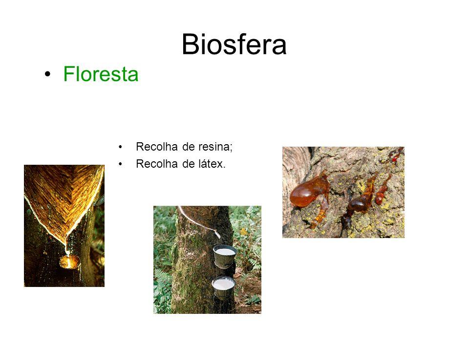 Biosfera • Floresta Recolha de resina; Recolha de látex.