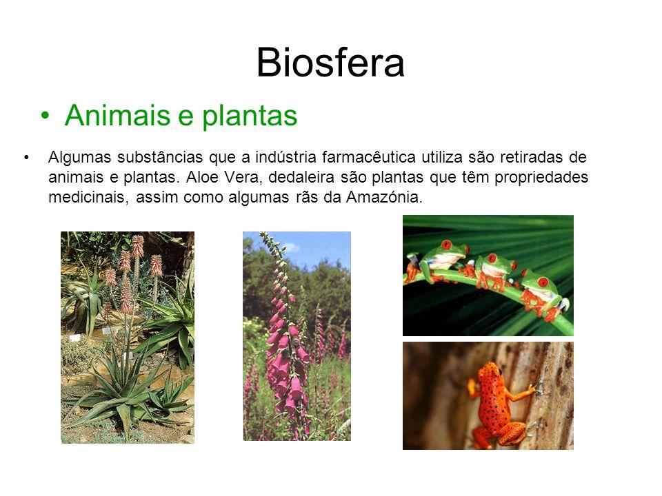 Biosfera • Animais e plantas