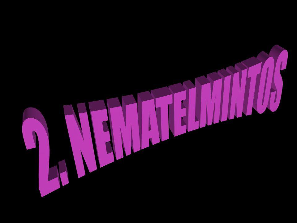 2. NEMATELMINTOS