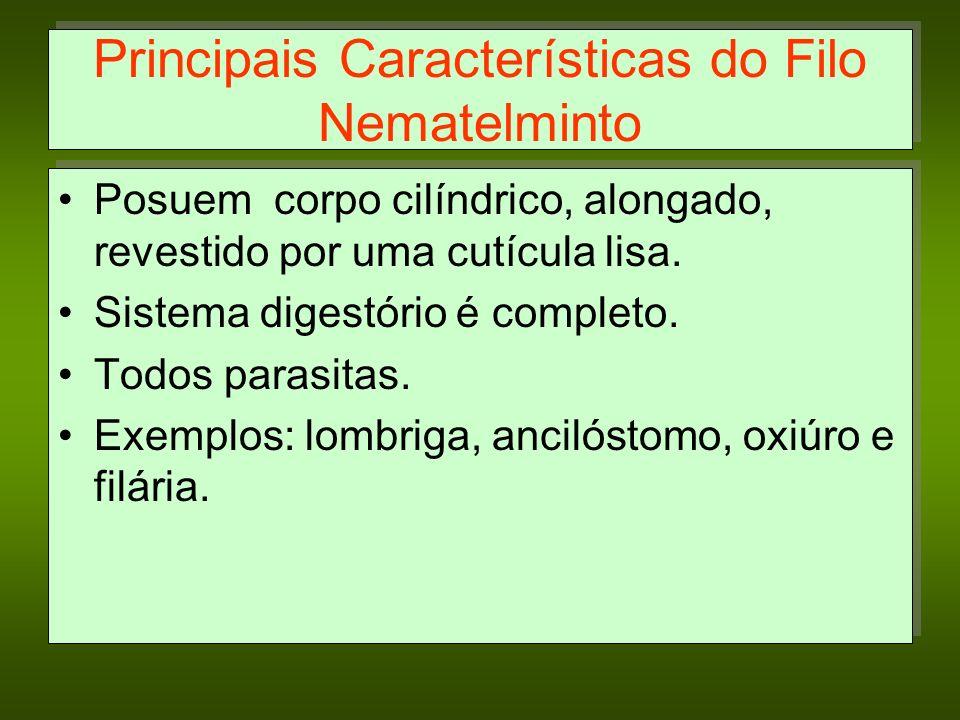 Principais Características do Filo Nematelminto