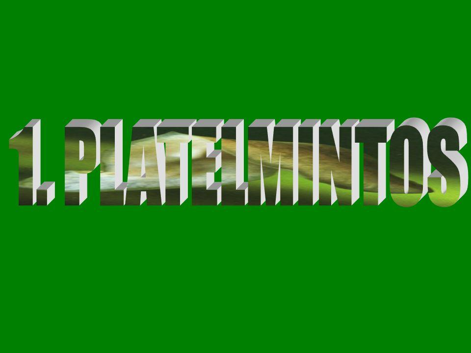 1. PLATELMINTOS