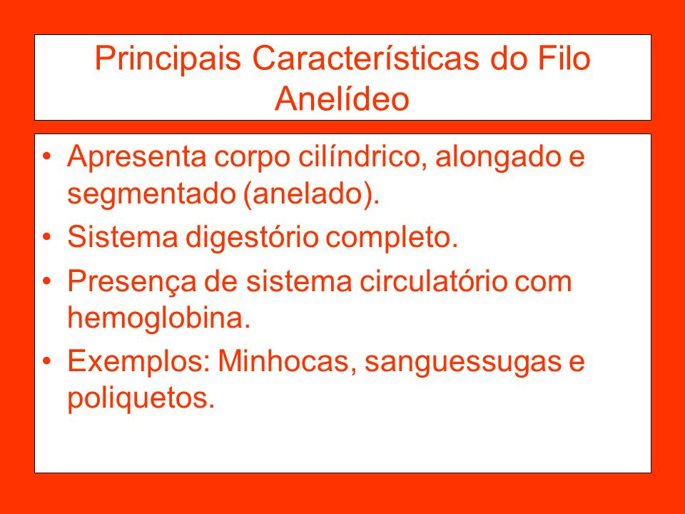 Principais Características do Filo Anelídeo
