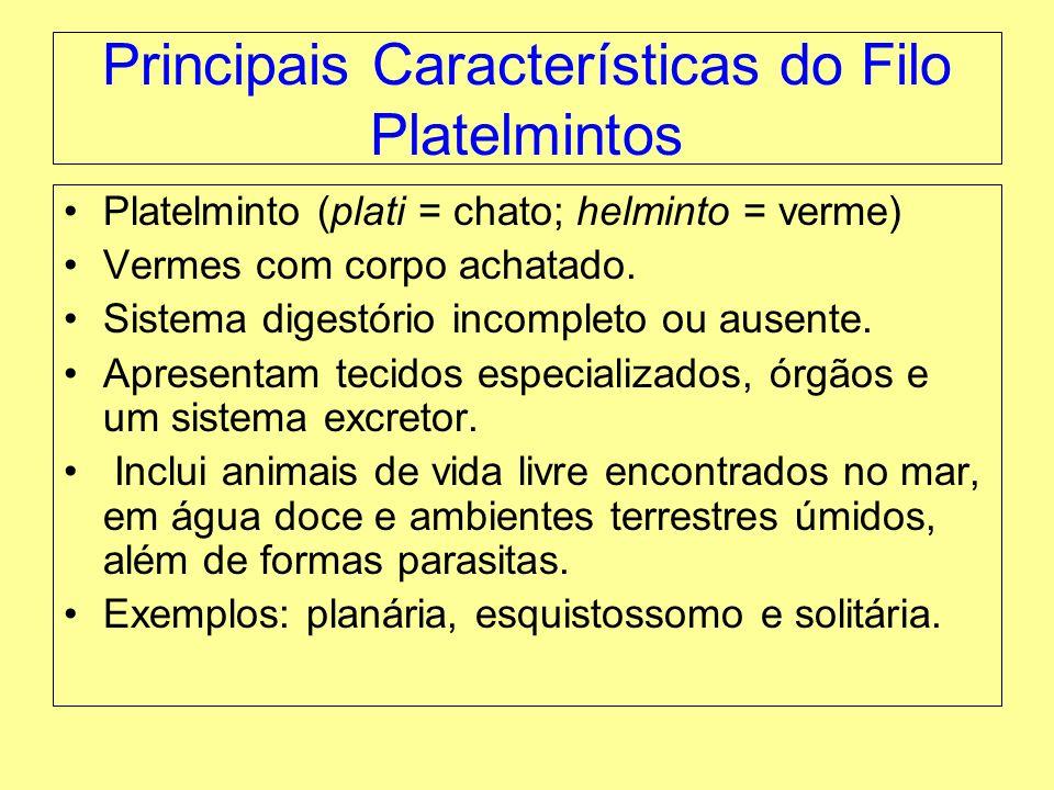 Principais Características do Filo Platelmintos