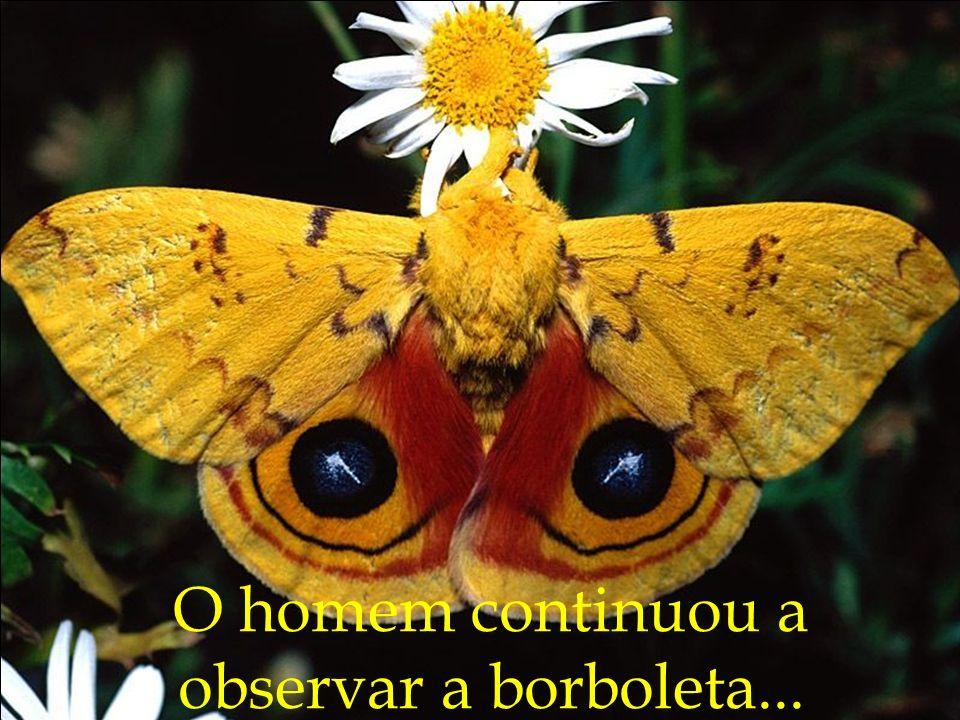 O homem continuou a observar a borboleta...
