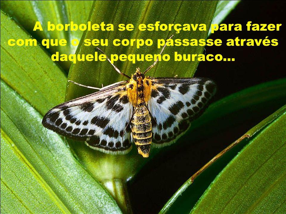 A borboleta se esforçava para fazer com que o seu corpo passasse através daquele pequeno buraco...