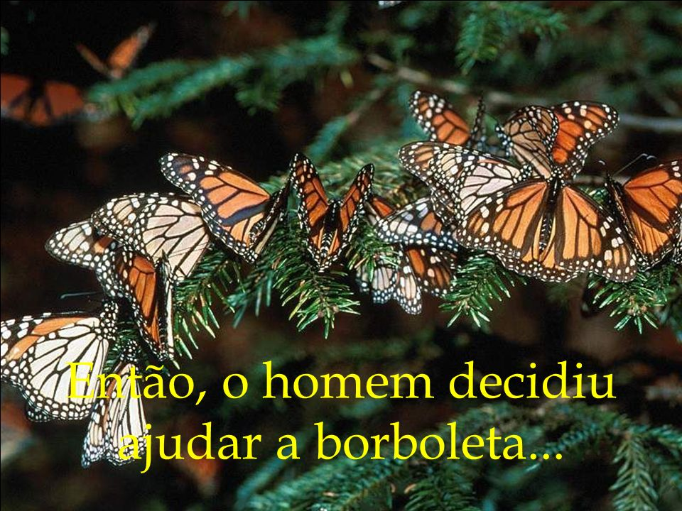 Então, o homem decidiu ajudar a borboleta...