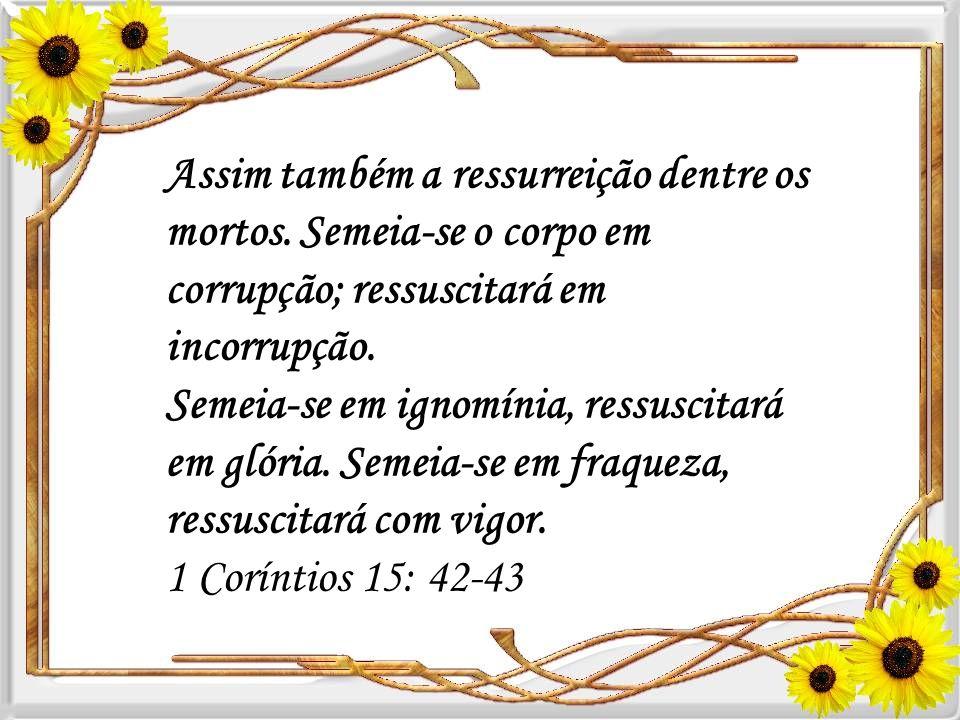 Assim também a ressurreição dentre os mortos