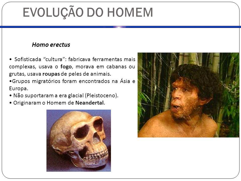EVOLUÇÃO DO HOMEM Homo erectus