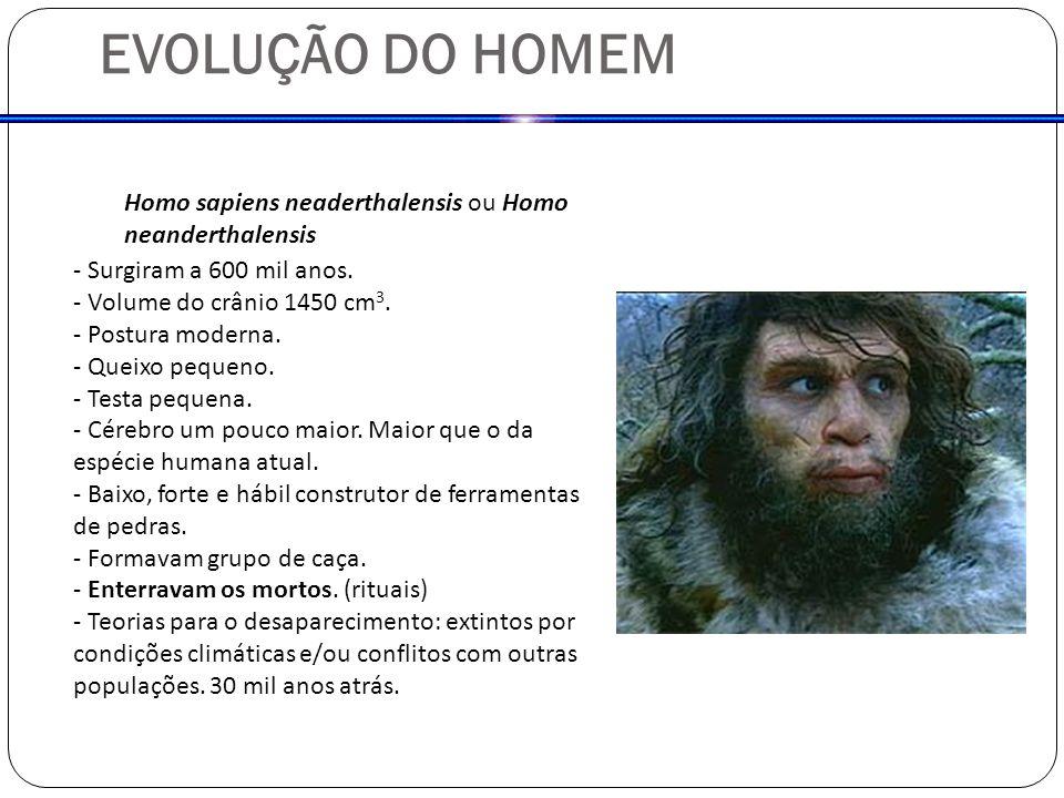 EVOLUÇÃO DO HOMEM Homo sapiens neaderthalensis ou Homo neanderthalensis. - Surgiram a 600 mil anos.