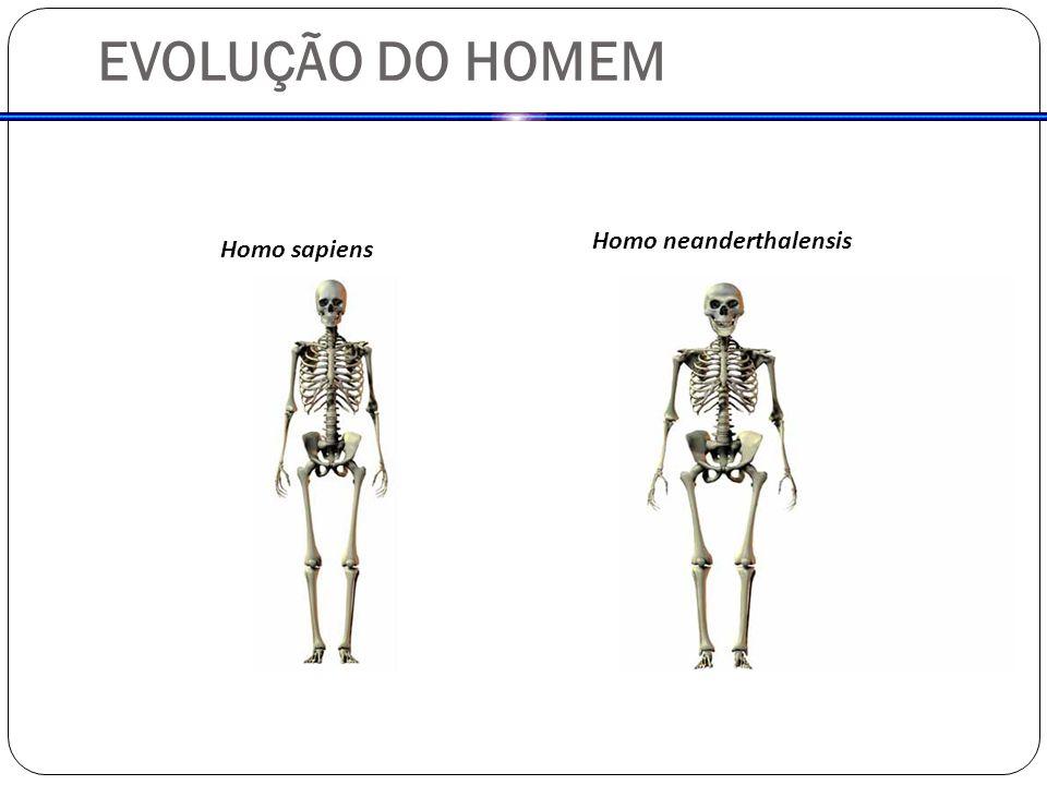 EVOLUÇÃO DO HOMEM Homo neanderthalensis Homo sapiens