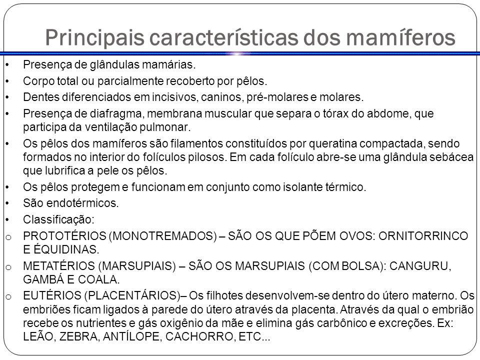 Principais características dos mamíferos