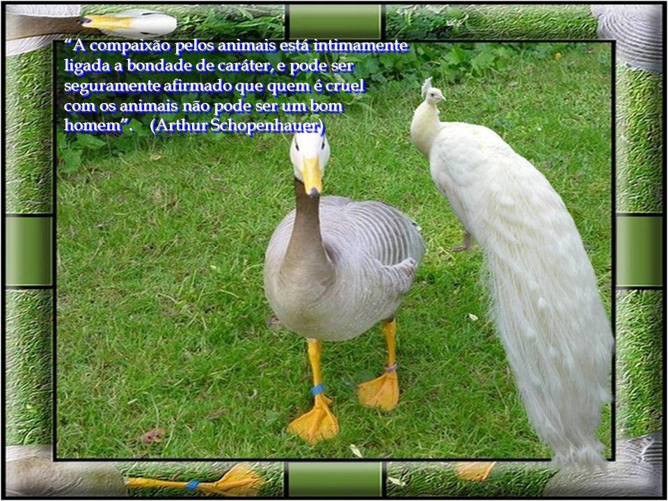 A compaixão pelos animais está intimamente