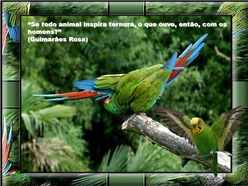 Se todo animal inspira ternura, o que ouve, então, com os