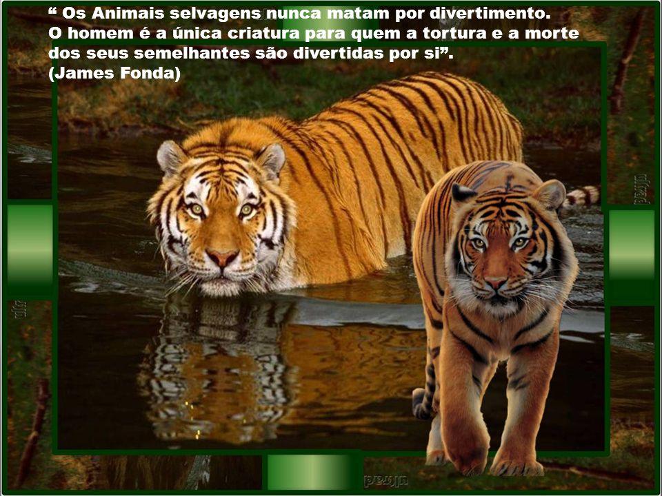 Os Animais selvagens nunca matam por divertimento.
