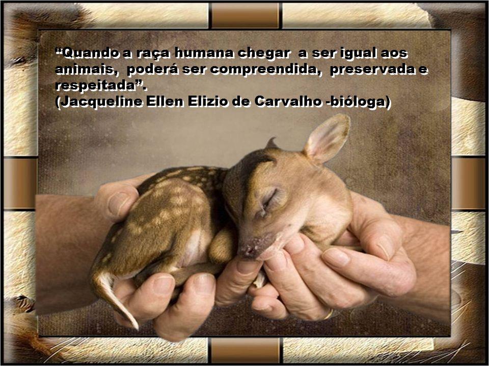 Quando a raça humana chegar a ser igual aos animais, poderá ser compreendida, preservada e respeitada .