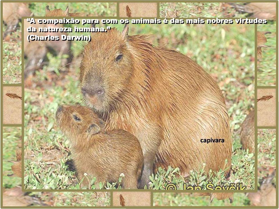 A compaixão para com os animais é das mais nobres virtudes