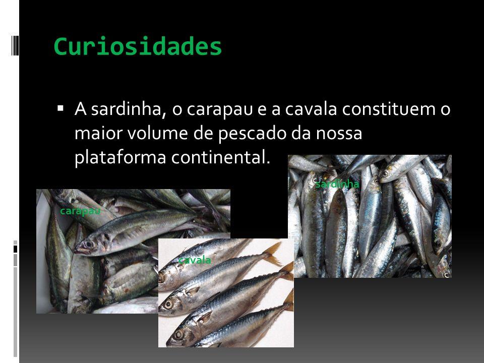 Curiosidades A sardinha, o carapau e a cavala constituem o maior volume de pescado da nossa plataforma continental.