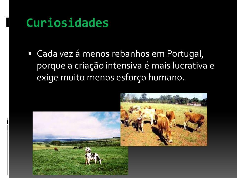 Curiosidades Cada vez á menos rebanhos em Portugal, porque a criação intensiva é mais lucrativa e exige muito menos esforço humano.