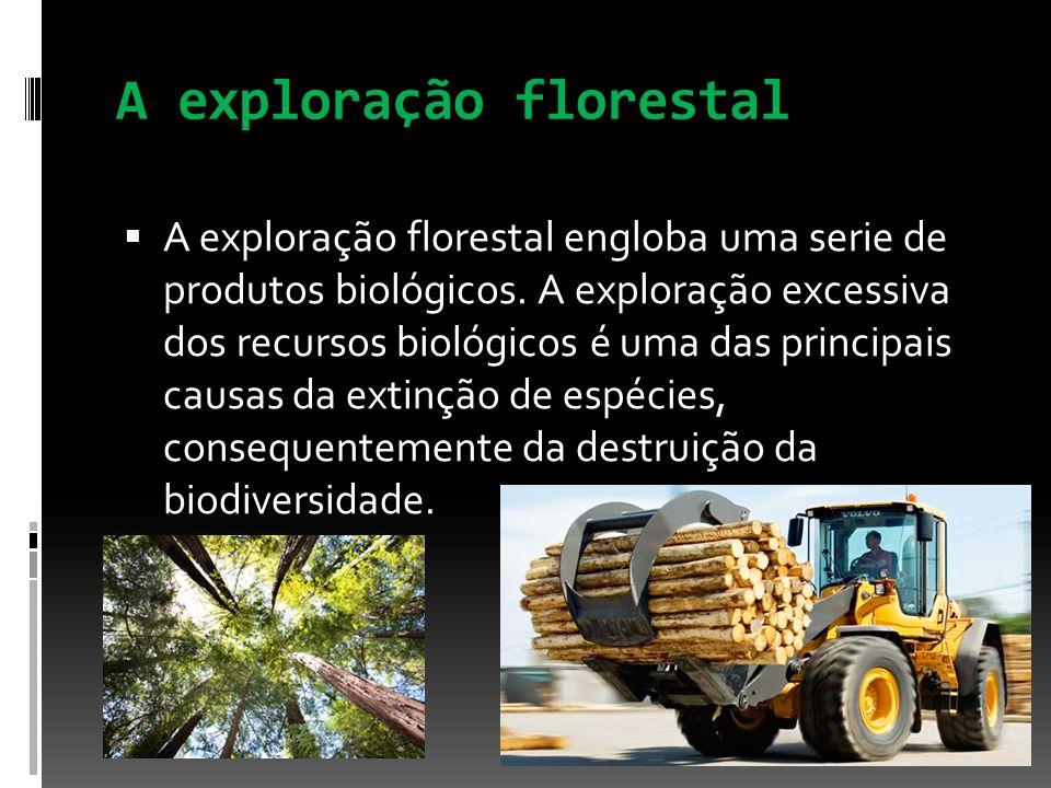 A exploração florestal