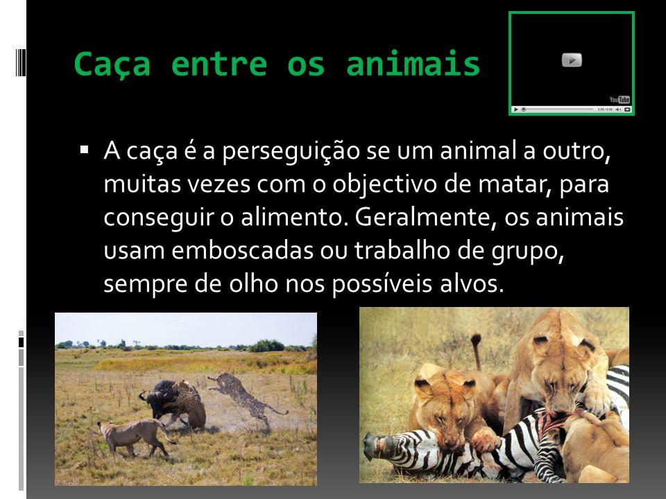 Caça entre os animais