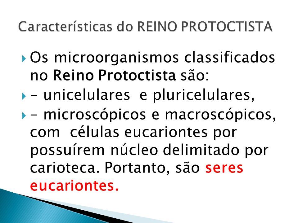 Características do REINO PROTOCTISTA