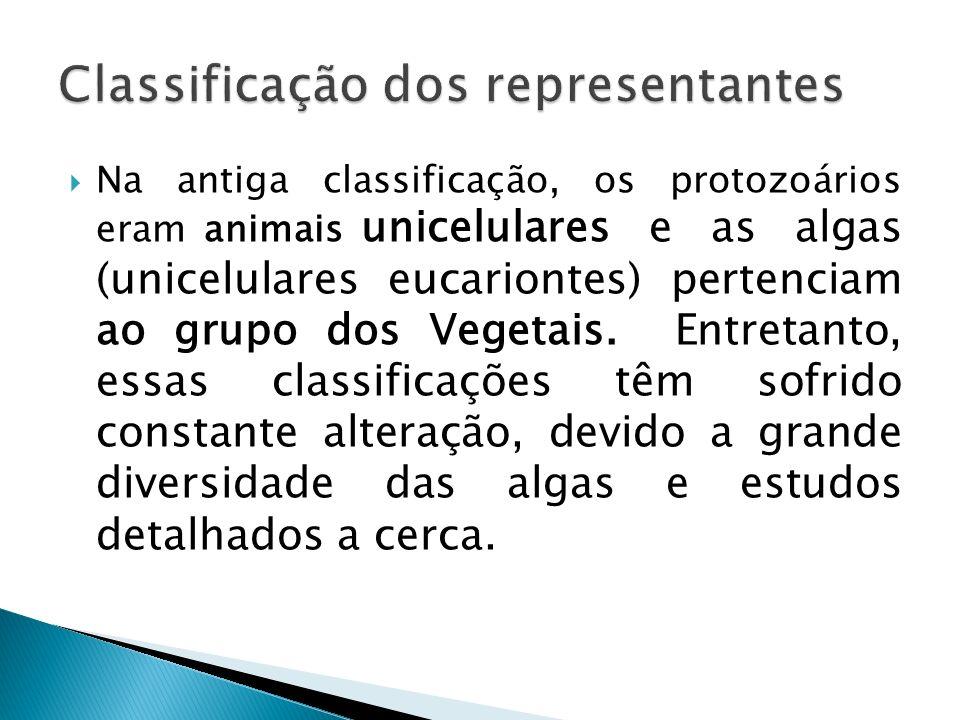 Classificação dos representantes