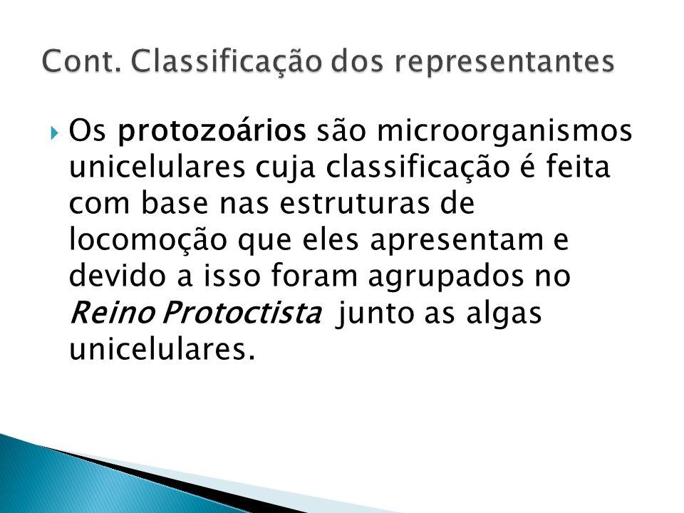 Cont. Classificação dos representantes
