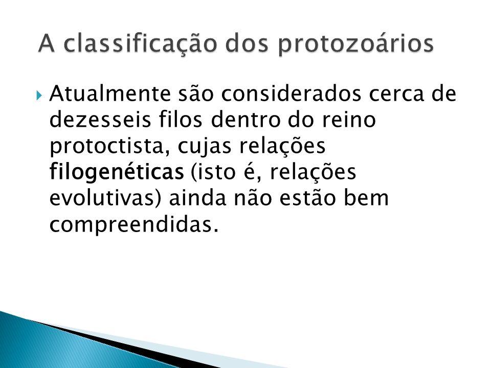 A classificação dos protozoários