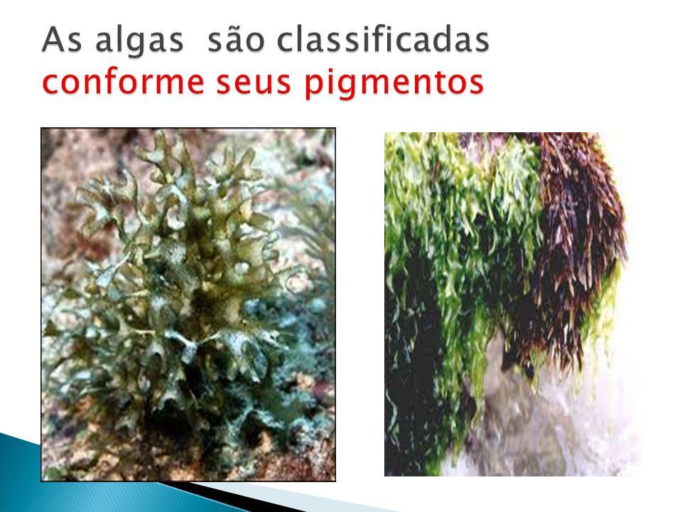 As algas são classificadas conforme seus pigmentos