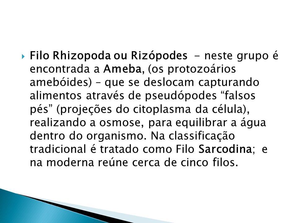 Filo Rhizopoda ou Rizópodes - neste grupo é encontrada a Ameba, (os protozoários amebóides) – que se deslocam capturando alimentos através de pseudópodes falsos pés (projeções do citoplasma da célula), realizando a osmose, para equilibrar a água dentro do organismo.