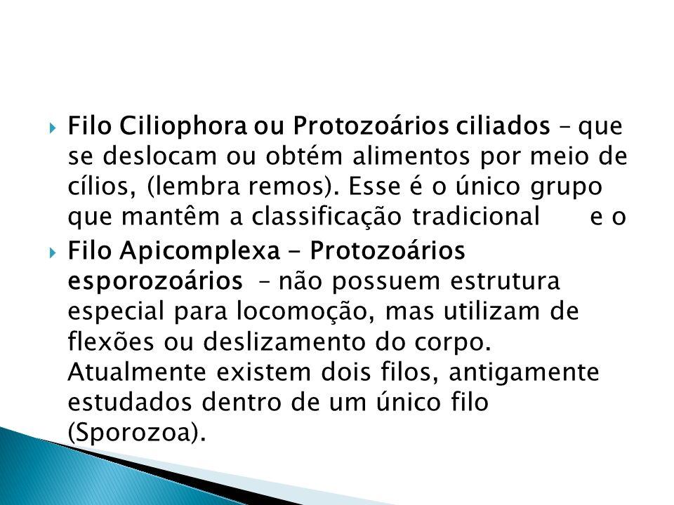 Filo Ciliophora ou Protozoários ciliados – que se deslocam ou obtém alimentos por meio de cílios, (lembra remos). Esse é o único grupo que mantêm a classificação tradicional e o