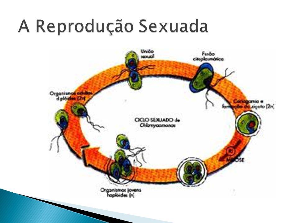 A Reprodução Sexuada
