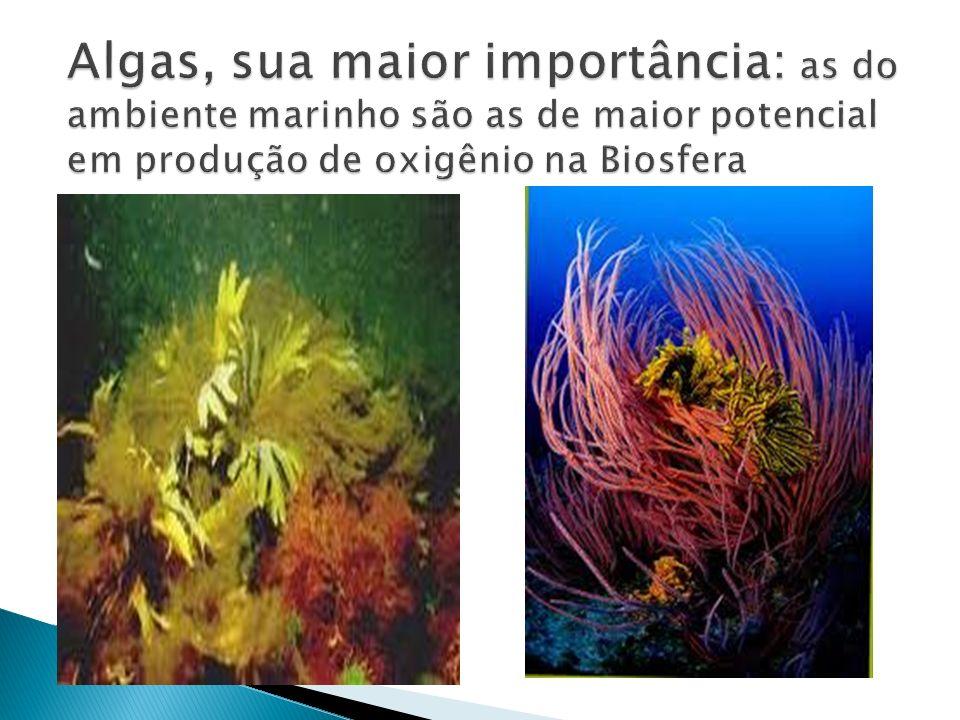 Algas, sua maior importância: as do ambiente marinho são as de maior potencial em produção de oxigênio na Biosfera