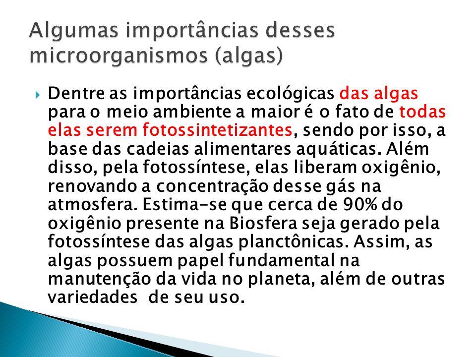 Algumas importâncias desses microorganismos (algas)