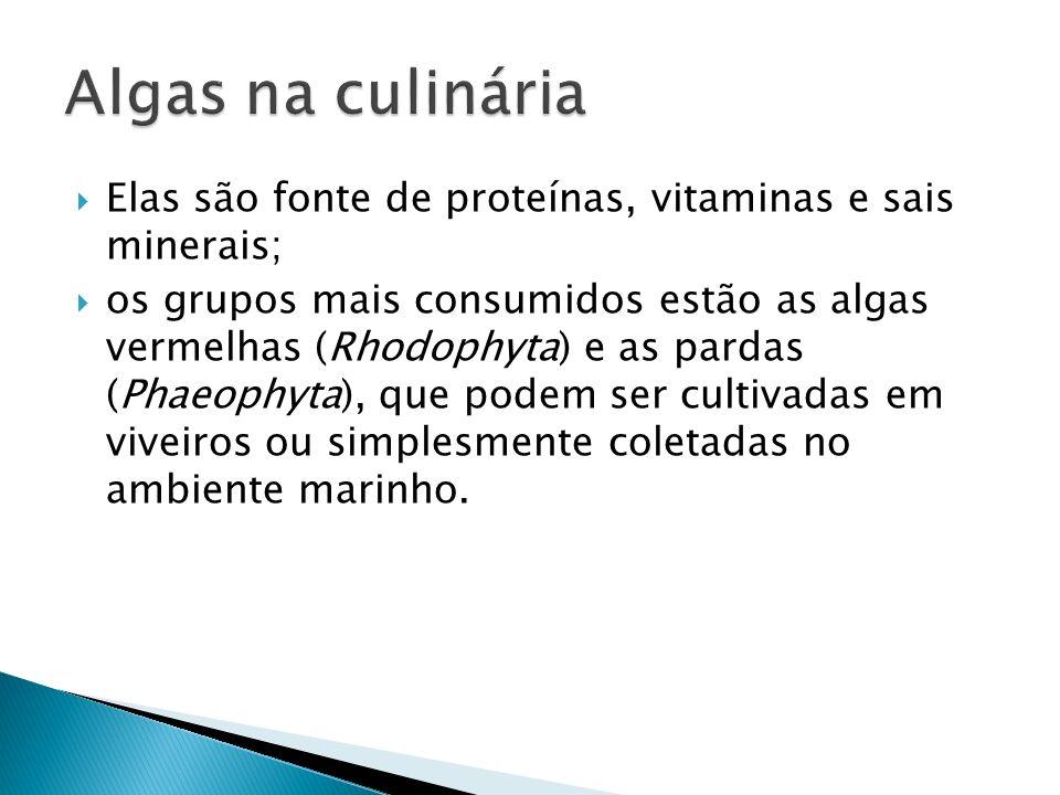 Algas na culinária Elas são fonte de proteínas, vitaminas e sais minerais;