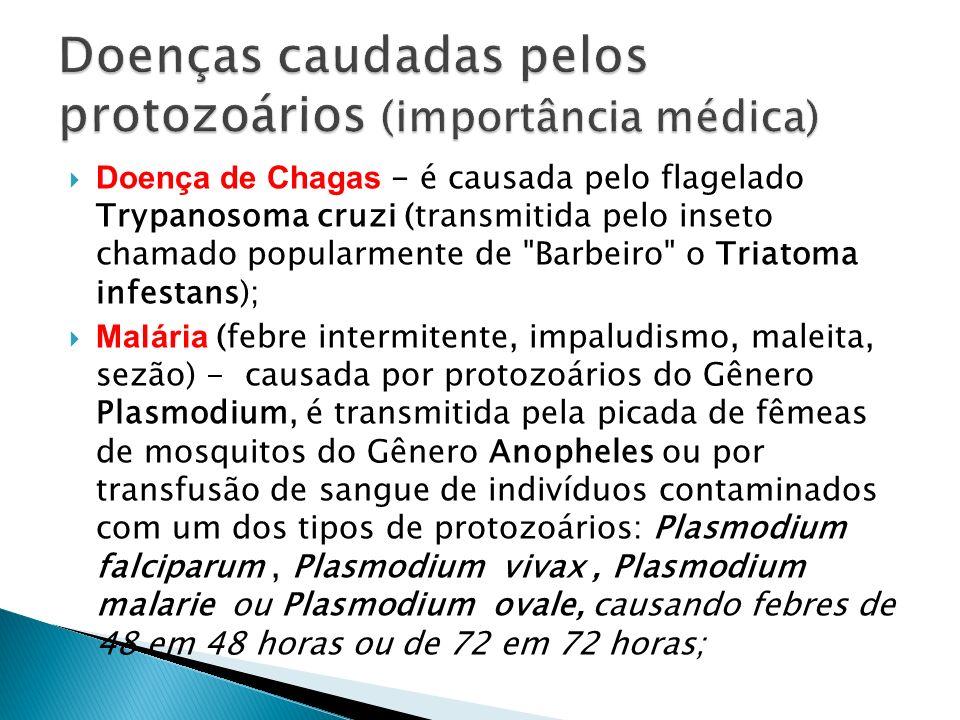 Doenças caudadas pelos protozoários (importância médica)