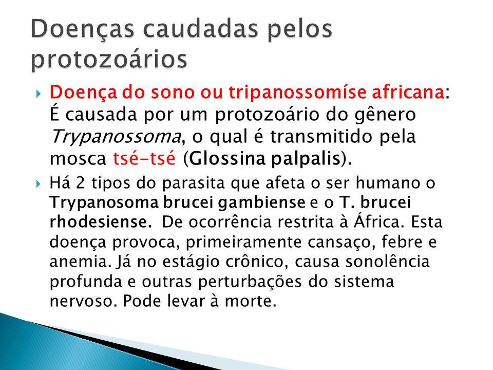 Doenças caudadas pelos protozoários