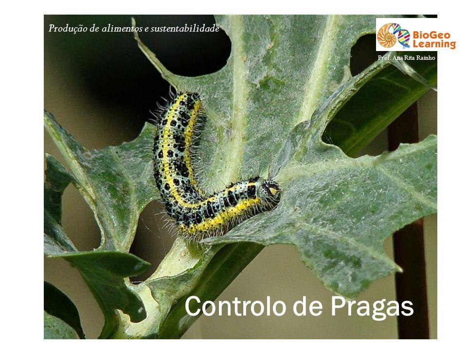 Produção de alimentos e sustentabilidade