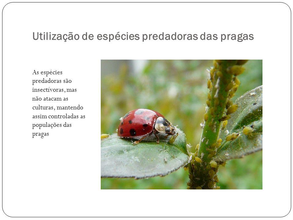 Utilização de espécies predadoras das pragas
