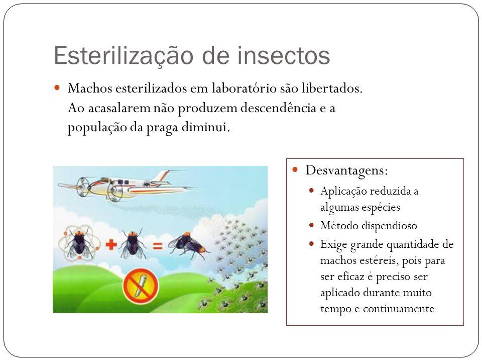 Esterilização de insectos