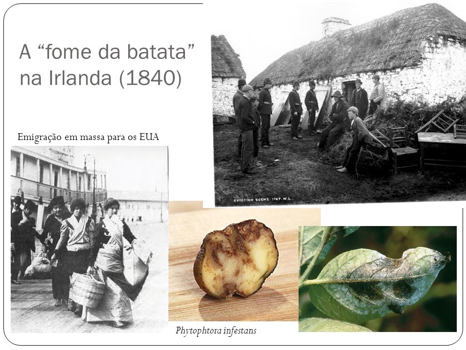 A fome da batata na Irlanda (1840)
