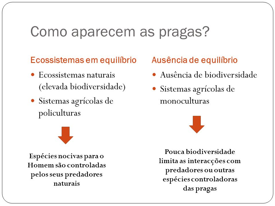 Como aparecem as pragas