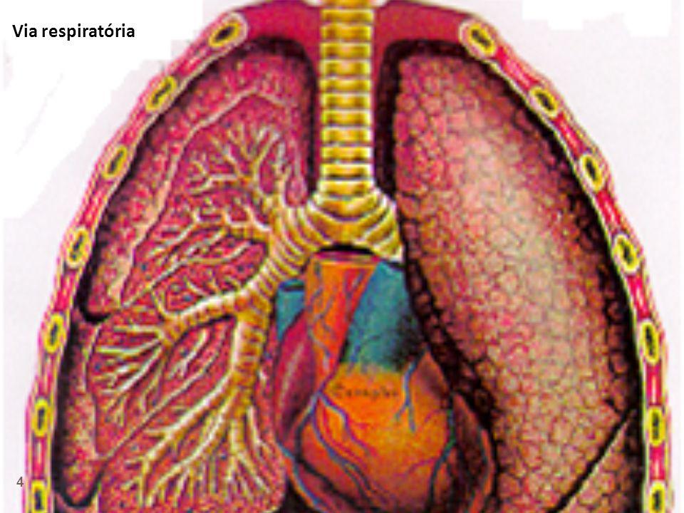 Via respiratória