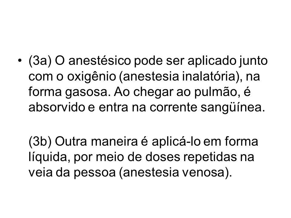 (3a) O anestésico pode ser aplicado junto com o oxigênio (anestesia inalatória), na forma gasosa. Ao chegar ao pulmão, é absorvido e entra na corrente sangüínea.
