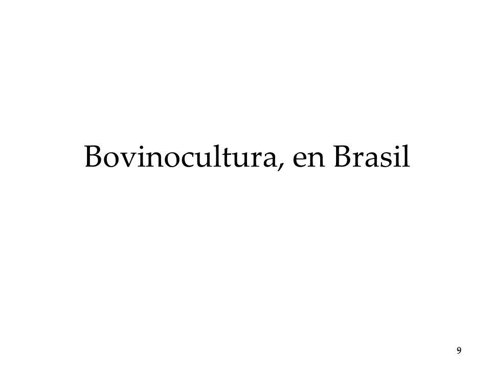 Bovinocultura, en Brasil